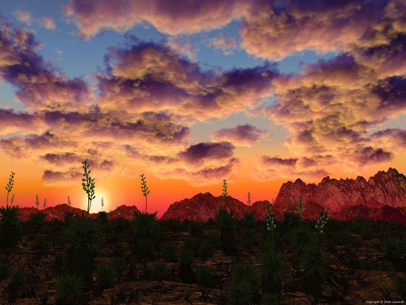 yucca desert sunset