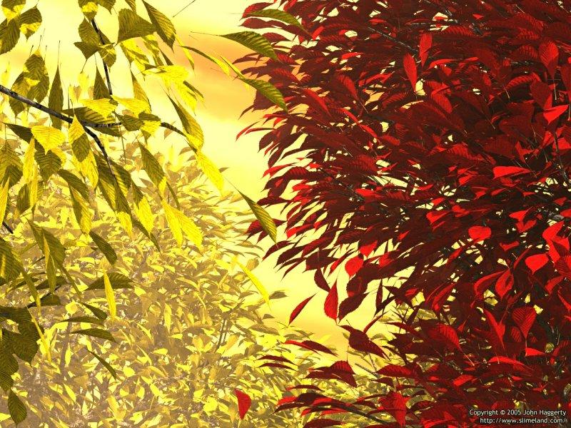 Autumn detail 1